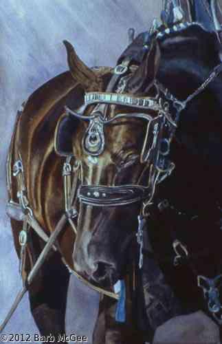 Grace - Percheron mare in harness