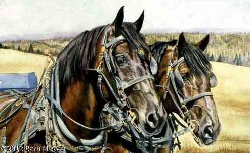In One Accord - Two Percherons in harness