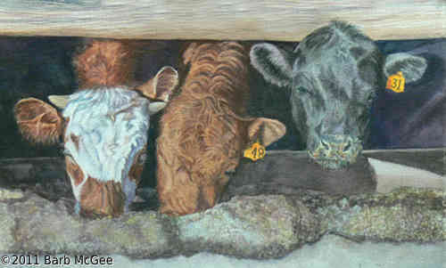 See Food Diet - Three calves at the feed bunk