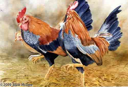 Country Line Dance - Three Chickens doing a Line Dance