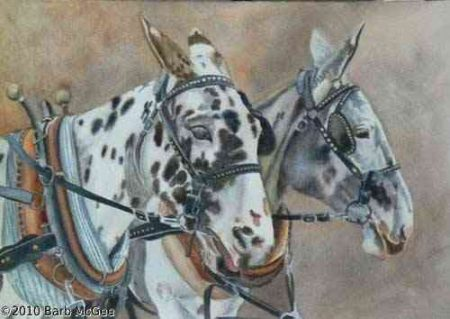 EquallyYoked- A pair of Appaloosa mules in harness