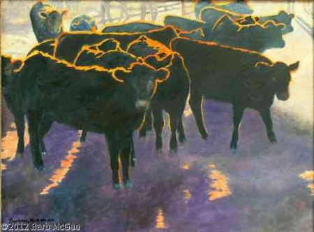 Evening Glow - Black Angus Calves with a halo from the sun