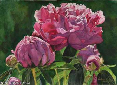 In His Light - Dark Red Peony in His Light